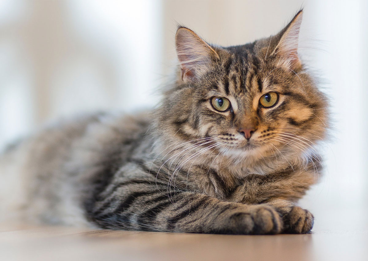 Cat friendly veterinary practice