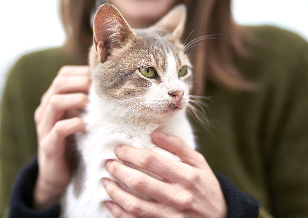 Cat veterinary practice close to Deal