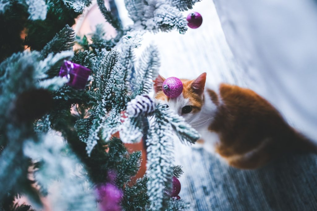 How to keep your cat safe at Christmas