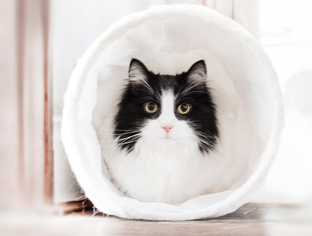 Cat hiding in tunel