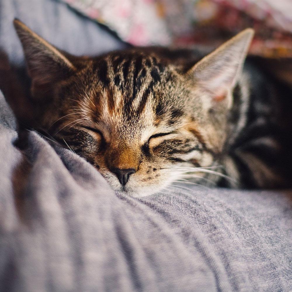 Diarrhoea in cats
