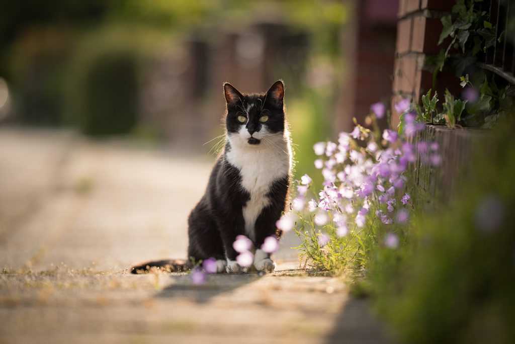 Antifreeze is toxic to cats