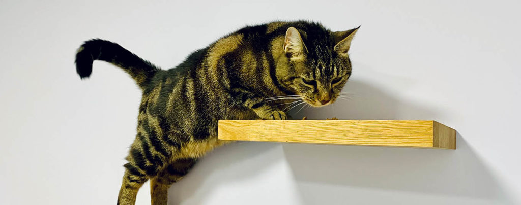 Cat at vets in Deal, Kent for Hyperthyroid treatment